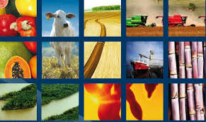 agribusiness 2015